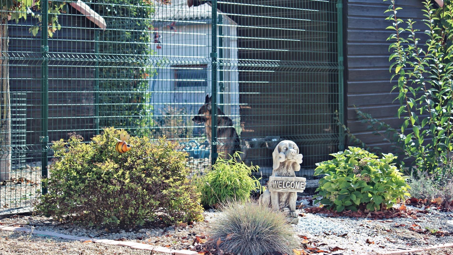 Pension canine près de Poitiers