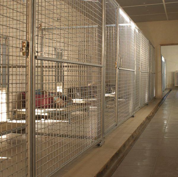 Pensions pour chien Montreuil Bonnin près de Poitiers 86